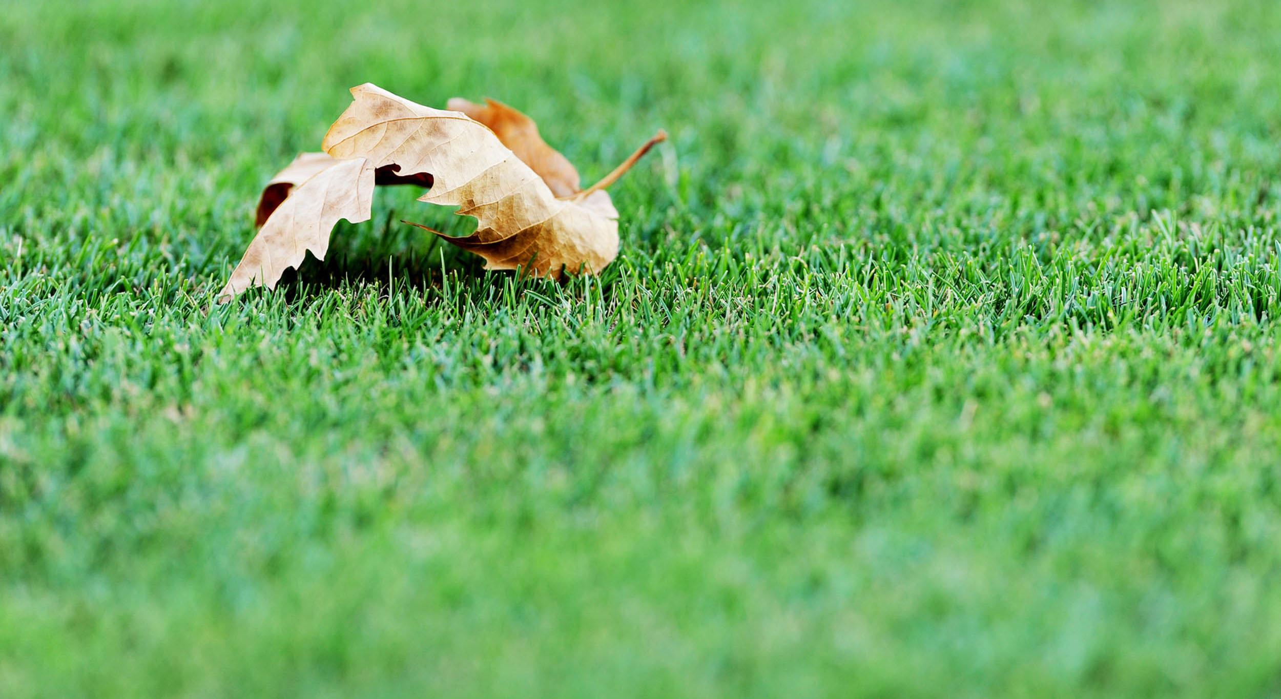 fall-leaf-1.jpg